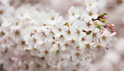 bloom-2525_1280