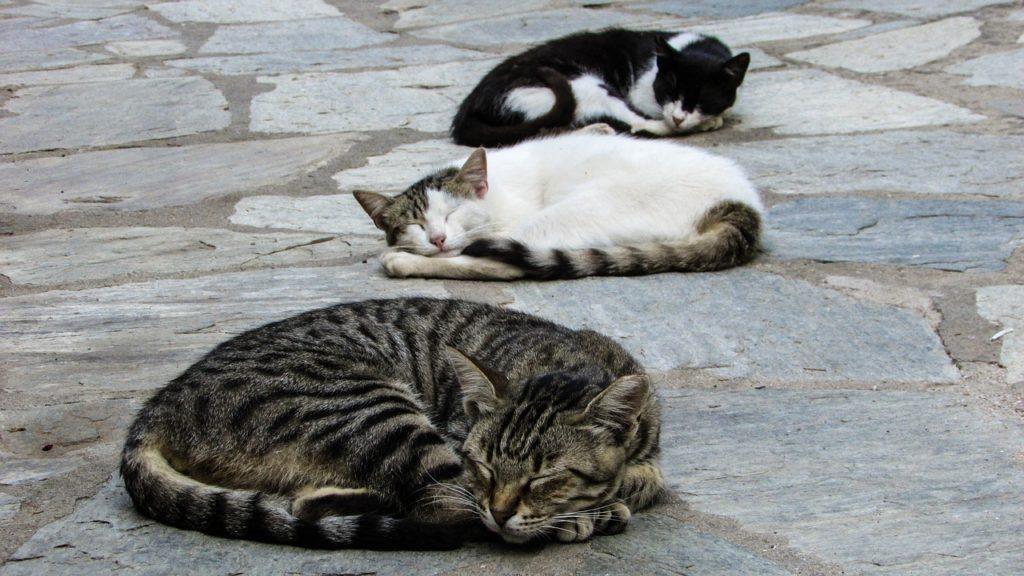 chats-qui-dorment